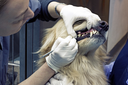 Portsmouth Pet Dental